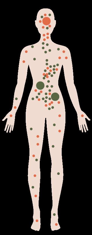 schéma corps humain avec récepteurs CB1 CB2 canabinnoïdes